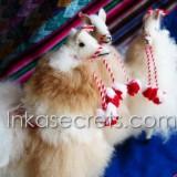 "12 Baby Alpaca ""Llama"" (BALM)"