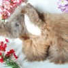 04 Alpaca Stuffed Animal Elephant (ASNEH)