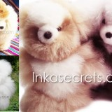 50 Baby alpaca bear & dog small