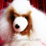06 Baby alpaca fur dog small.
