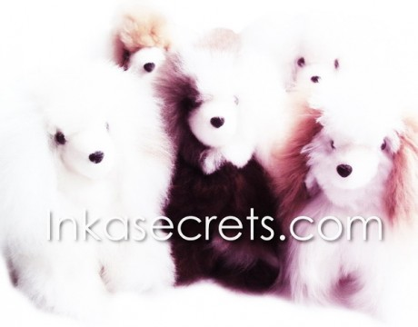 100 Baby alpaca fur dog small